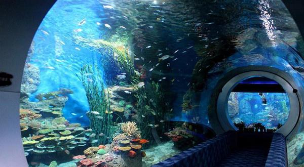 九江海洋馆设计签约